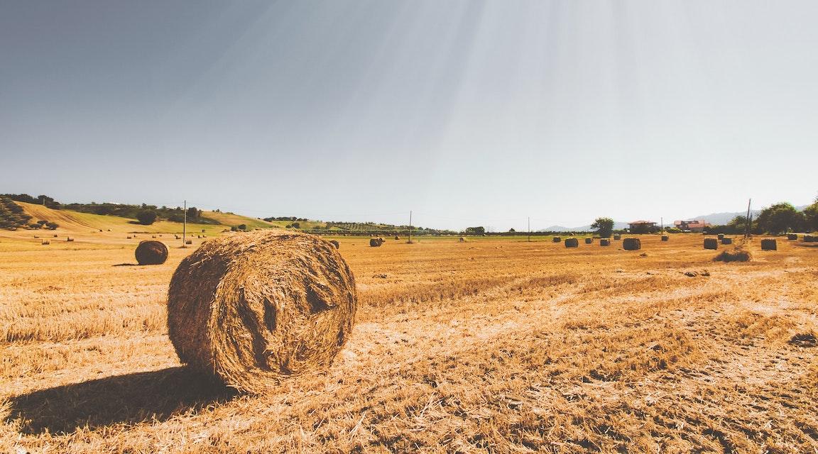 Bonde ska betala 75 000 kronor i företagsbot – rev biotopskyddade stenmurar