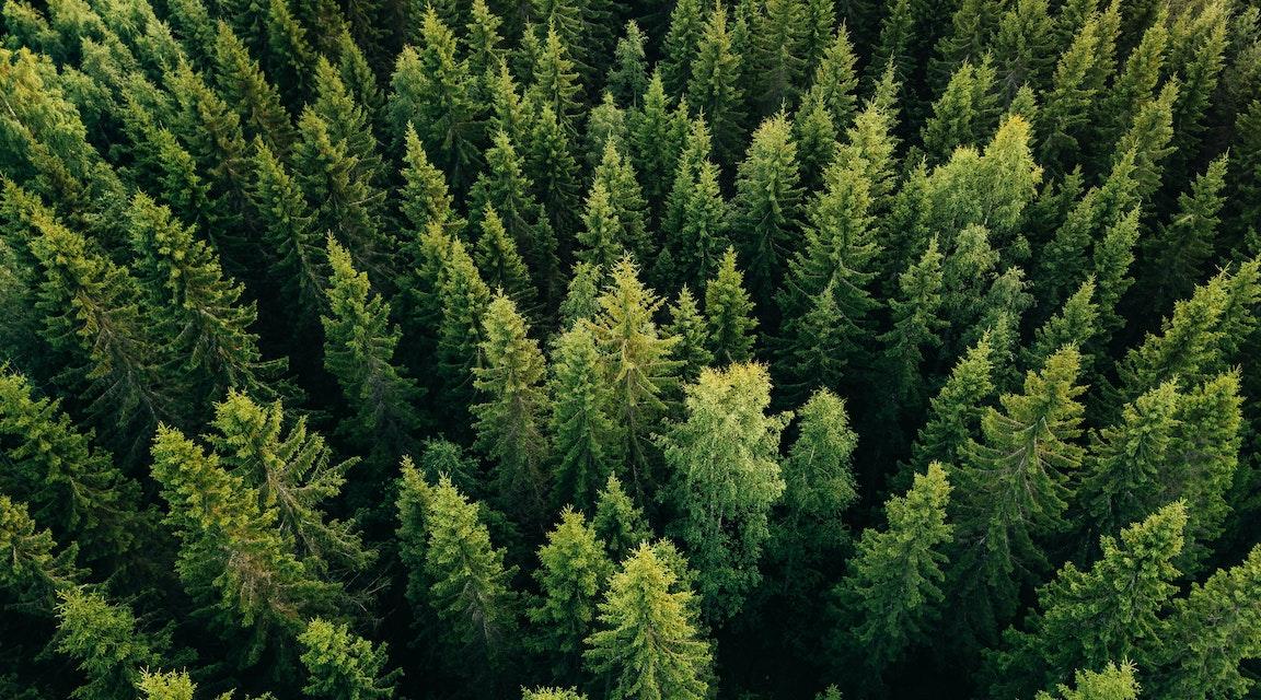 Skogsbolag bötfälls för bristande anmälningsrutiner